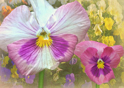 Pansy Duo Print by Sandi OReilly