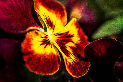 Pansy Flower 4 Print by Alexander Senin