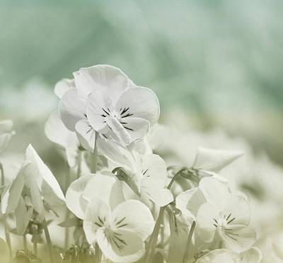 Pansy Flowers Print by Kim Hojnacki