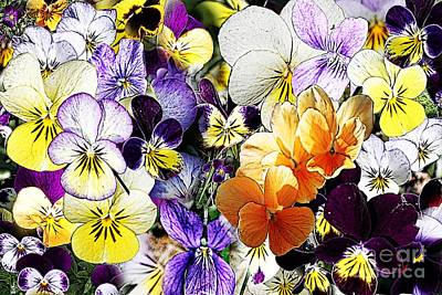 Pansy Posy Print by Erica Hanel
