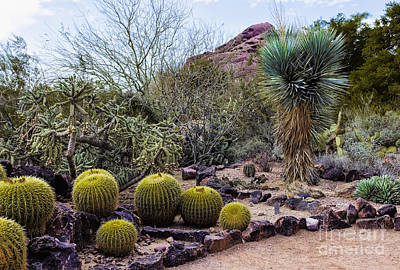 Papago And Barrels Original by Jon Burch Photography