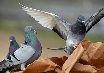 Paper Bag Pigeons 3 Print by Fraida Gutovich