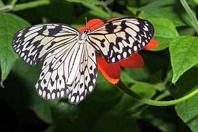 Paper Kite Butterfly Print by Dirk Wiersma