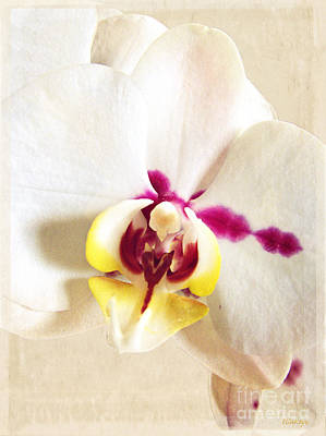 Paper White Orchid Print by Ella Kaye Dickey