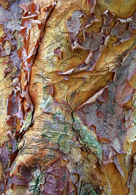 Bark Digital Art - Paperbark Abstract by Jessica Jenney