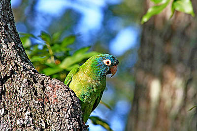 Parakeet In The Park Print by Ira Runyan
