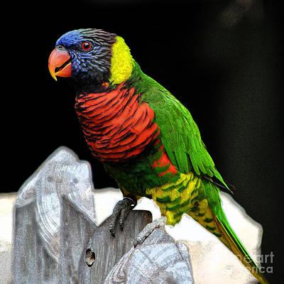 Parakeet Digital Art - Parakeet Vibrant Colorful Profile Ink Outlines Digital Art by Shawn O'Brien