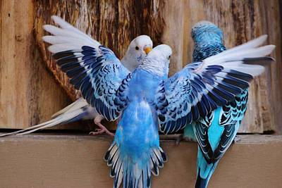 Parakeet Digital Art - Parakeets by Paulette Thomas