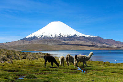 Llama Photograph - Parinacota Volcano Lake Chungara Chile by Kurt Van Wagner