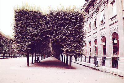 Paris Palais Royal Row Of Trees And Paris Palais Royal Garden Architecture Print by Kathy Fornal