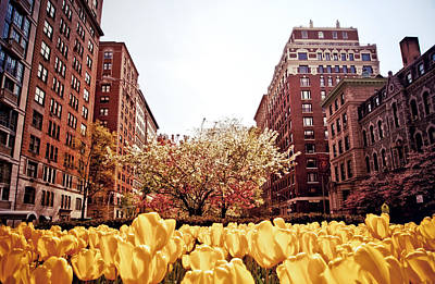 Park Avenue In The Spring  Print by Vivienne Gucwa