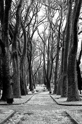 Park Path Print by John Rizzuto