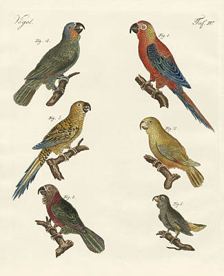 Macaw Drawing - Parrots Of The New World by Splendid Art Prints