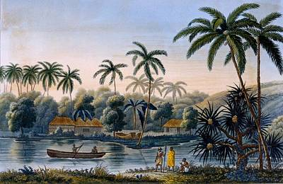 Wilderness Drawing - Part Of The Village Of Matavae, Coconut by French School
