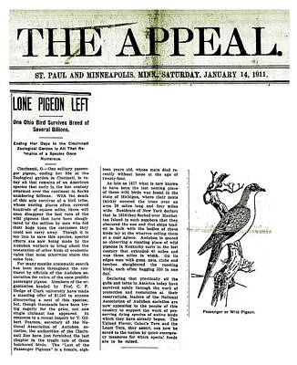 Passenger Pigeon Newspaper Article Print by Library Of Congress