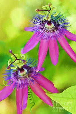 Passiflora Digital Art - Passiflora Piresii Vine  - Passiflora Twins by Michelle Wiarda