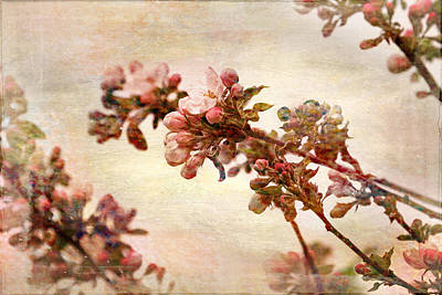 Cherry Blossoms Photograph - Pastel Blossoms In Spring by Peggy Collins