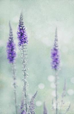 Silks Mixed Media - Pastel Colors by Svetlana Sewell