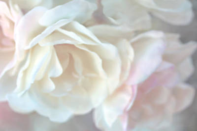 Ivory Rose Photograph - Pastel Rose Flowers by Jennie Marie Schell