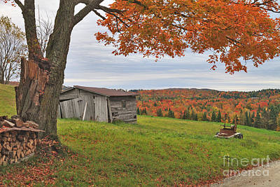 Maple Photograph - Pastoral Elements by Charles Kozierok