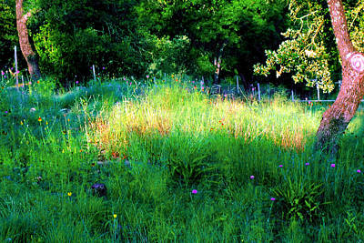 Patch Of Morning Sunlight Wildflowers  Print by ARTography by Pamela Smale Williams
