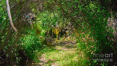 Alligator Bayou Photograph - Path by Carey Chen