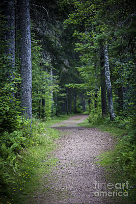 Lush Photograph - Path In Dark Forest by Elena Elisseeva