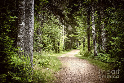 Path In Green Forest Print by Elena Elisseeva