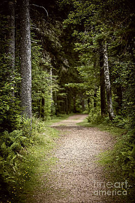 Dense Photograph - Path In Old Forest by Elena Elisseeva
