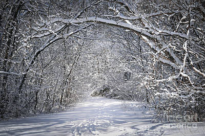 Path In Snowy Winter Forests Print by Elena Elisseeva
