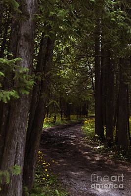 Base Path Photograph - Path In The Dark Woods by Margie Hurwich