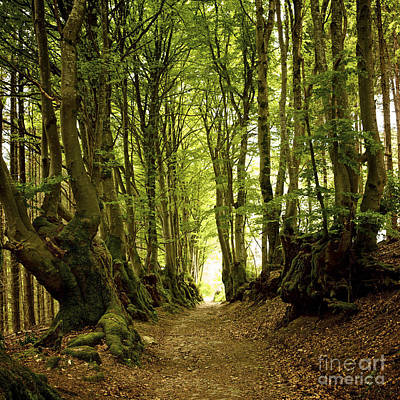 Bog Photograph - Path Lined Whit Old Beeches. Allier. Auvergne. France by Bernard Jaubert