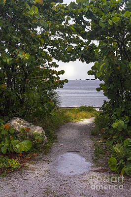 Trial Photograph - Path Through The Sea Grapes by Marvin Spates