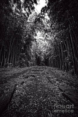 Pathway Through A Bamboo Forest Maui Hawaii Print by Edward Fielding