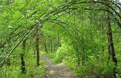 Pathway Through Nature's Bower Original by Melissa McCrann