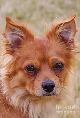 Dog Photograph - Paulanka by Deborah Smolinske