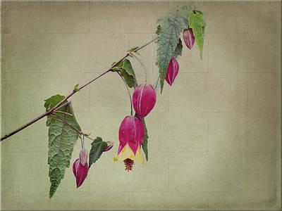 Flora Photograph - Paulette by Elaine Teague
