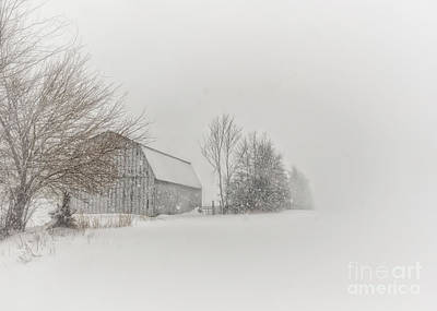 Winter Storm Photograph - Peace And Quiet by Pamela Baker