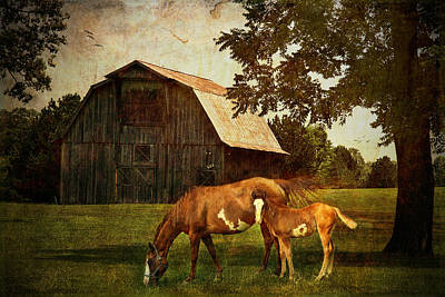 Animals Digital Art - Peace Of Country Living by Lianne Schneider