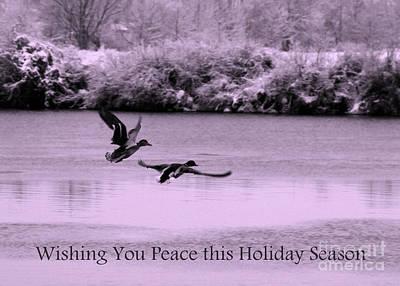 Landscape Photograph - Peaceful Holidays Card - Winter Ducks by Carol Groenen