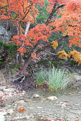 Possum Photograph - Peaceful Retreat Lost Maples Texas Hill Country by Silvio Ligutti