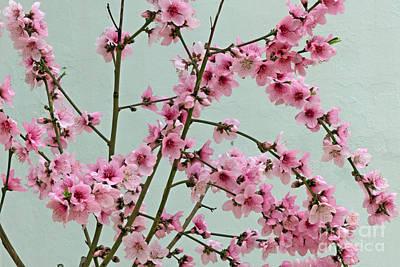 Peach Blossom 1 Print by Rod Jones