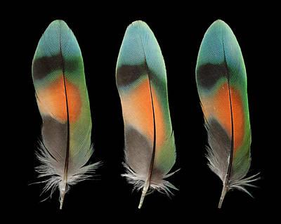 Lovebird Mixed Media - Peach Face Lovebird by Chris Maynard