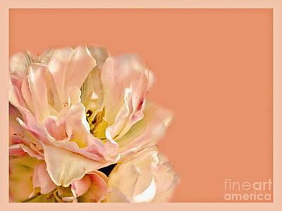 Peach Rose Print by Carol F Austin