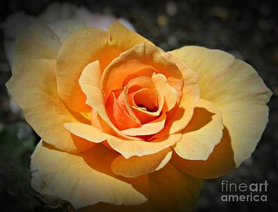 Neurotic Images Photograph - Peach Rose by Chalet Roome-Rigdon
