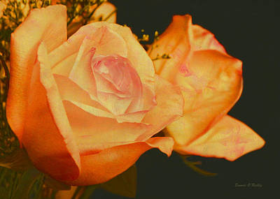 Peach Roses  Print by Sandi OReilly