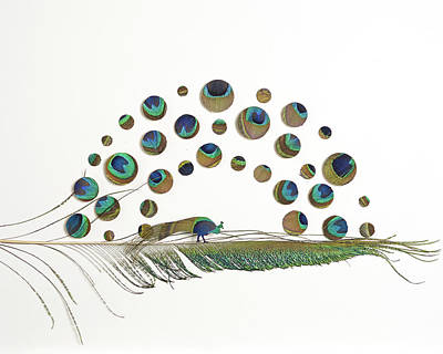 Peacock Attraction 5 Original by Chris Maynard
