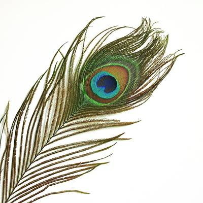 Peafowl Photograph - Peacock Feather by Mark Sykes