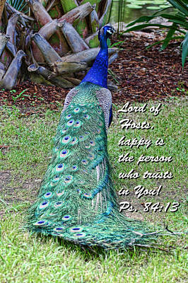 Peacock Psalms 84v13 Print by Linda Phelps