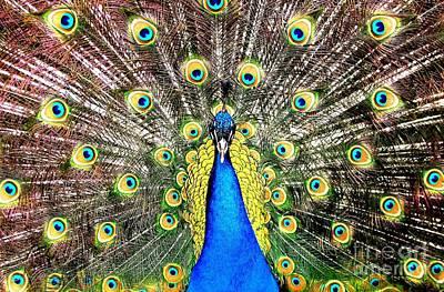 Peacock Photograph - Peacock by Rose Santuci-Sofranko